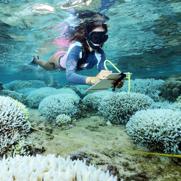 Le blanchissement corallien.